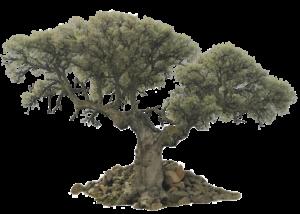 Kisspng Tree Evergreen Olive Desktop Wallpaper Trees 5Aba21990F6Bf4.8566977815221477370632